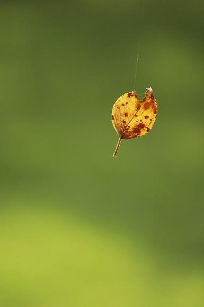 秋の天然モビール♪