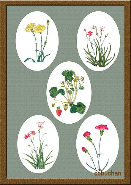 今月の花~5月♪