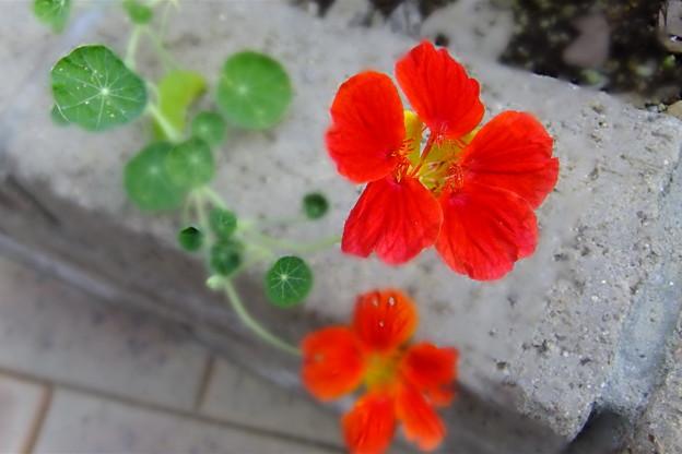 写真: 赤い花