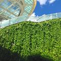 写真: オアシス21の壁面緑化 - 2