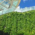 写真: オアシス21の壁面緑化 - 3