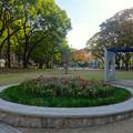 写真: 白川公園:鮮やかな花壇の花、奥には紅葉した木々