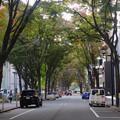 写真: 名古屋市科学館前の並木通り