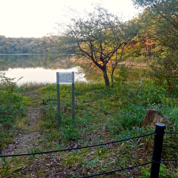初秋の小幡緑地 No - 34:絶滅危惧種である「マメナシ」の群生地