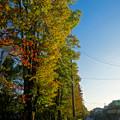 Photos: 紅葉が進んでいた、八田川(ふれあい緑道)沿いの並木 - 2