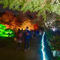 写真: 東山動植物園 紅葉ライトアップ 2015 No - 76