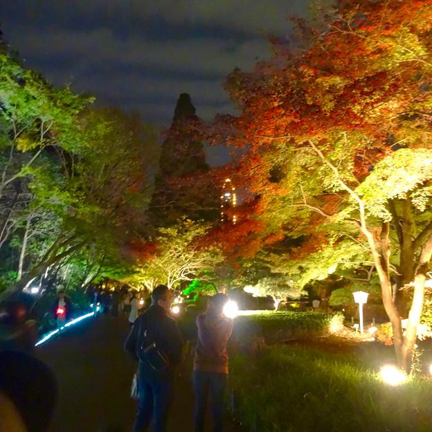 写真: 東山動植物園 紅葉ライトアップ 2015 No - 77