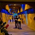 Photos: 東山動植物園 星が丘門から植物園へと通じる通路 - 1