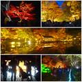 写真: 東山動植物園 紅葉ライトアップ 2015 No - 97
