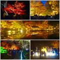 写真: 東山動植物園 紅葉ライトアップ 2015 No - 98