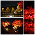写真: 白鳥庭園の紅葉ライトアップ 2015(まとめ)No - 4