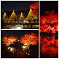 写真: 白鳥庭園の紅葉ライトアップ 2015(まとめ)No - 5