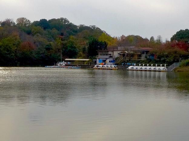 大高緑地公園 No - 41:池の反対側から見たボート乗り場とスワンボート