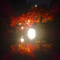 写真: 白鳥庭園「紅葉ライトアップ 2015」No - 116
