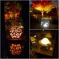 写真: 白鳥庭園 紅葉ライトアップ 2015:紅葉に彩りを添える、個性的な様々な美濃和紙あかりアートの作品 - 7