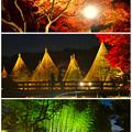 写真: 白鳥庭園「紅葉ライトアップ 2015」No - 225:紅葉、雪吊り、竹林