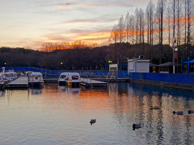 庄内緑地公園:夕暮れ時のボート池周辺の景色 - 10