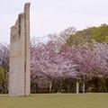 写真: 落合公園:ストーンヘンジ風のオブジェと桜 - 2