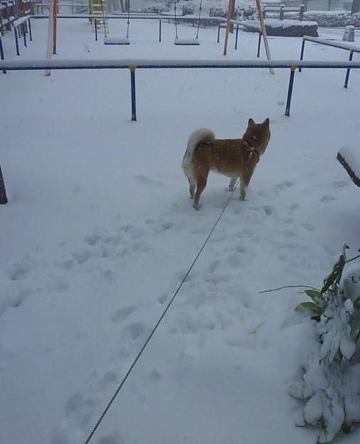雪が降って積もると