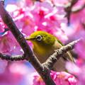 桜に包まれて・・・