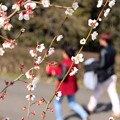 春の陽散歩