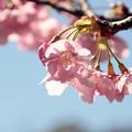 春の陽を浴びて