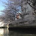 東京の水辺(お花見)