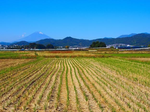 Photos: 秋の新芽