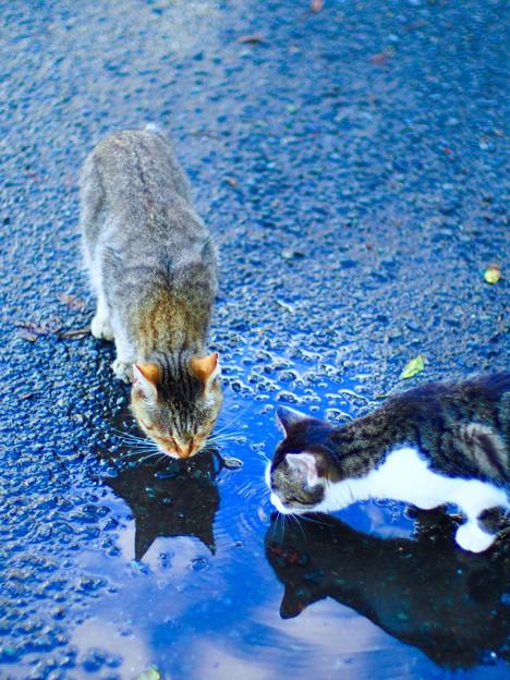 「第二回写真と言の葉」 ネコ二匹