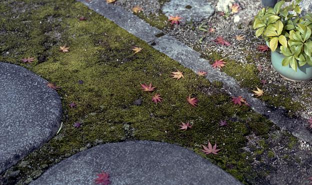 飛び石と落ち葉2