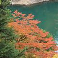 水殿ダム湖 10
