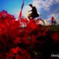 Photos: 萌ゆる季節.......