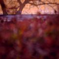 写真: 一陽来復.......
