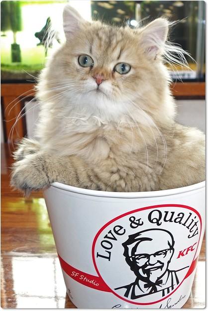 写真: Special KFC
