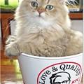 Special KFC