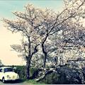 写真: てんとう虫の ♪春散歩♪