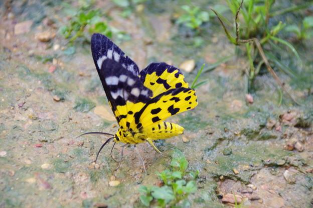 Photos: 蝶であってほしい