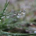 雨上がりの朝1