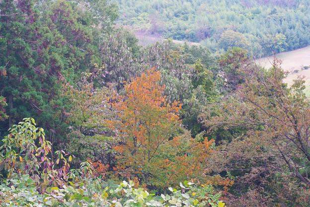 滝山城からの遠景_9