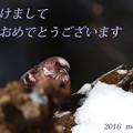 Photos: 賀正