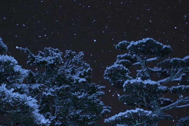 夜の松の木と降る雪
