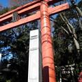 Photos: 世田谷線:宮の坂駅界隈_世田谷八幡宮-01