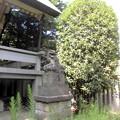 世田谷線:上町駅界隈_天祖神社-02社殿・狛犬a