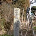 Photos: 世田谷線:松原駅界隈_西福寺-19a干支本尊入口石標