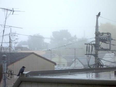 朝焼け→霧雨(カラス2羽)_2015.11.27.-02
