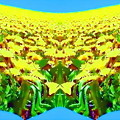 Photos: world of yellow-04b