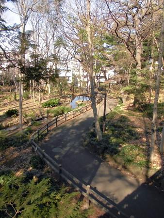 林試の森公園_せせらぎ橋より-01