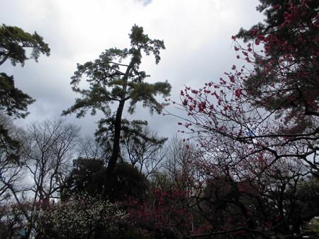 宝来公園(2016.Feb.)_梅-07
