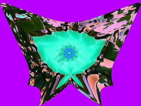 夜の蝶-01a