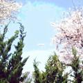 写真: 桜と飛行船-02a